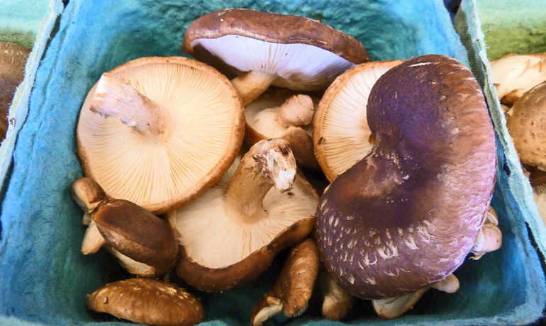 "There are no known cases of foodborne illness attributed to consumption of fresh mushrooms grown in North America, says Luke LBorde. ""However, absence of evidence is not evidence of absence."" (Credit: F Delventhal/Flickr)"