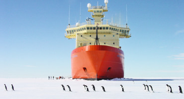 Adelie penguins walk in file on sea ice in front of US research icebreaker Nathaniel B. Palmer in McMurdo Sound. (Credit: John Diebold)