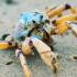 solder crab