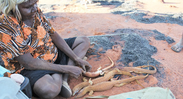 Nyalanka Taylor prepares her harvest of monitor lizards for cooking. (Credit: Rebecca Bliege Bird)