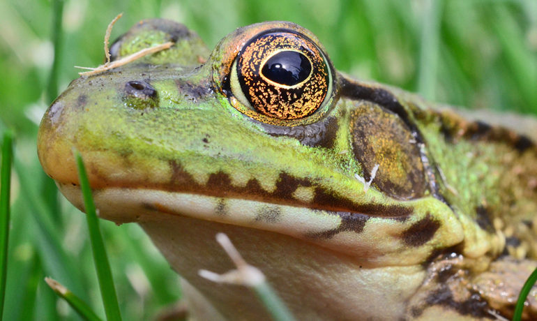 """Focusing only on amphibians to understand chytrid is like focusing only on people to understand Lyme disease,"" says Kevin Smith. Like any pathogen, it can't be effectively controlled unless all its hiding places are known. (Credit: Reigh LeBlanc/Flickr)"