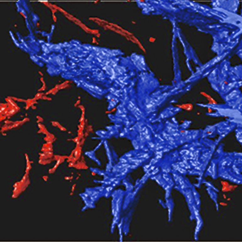 In a rock and metal sample created by Stanford scientists to mimic the make up of the early Earth mantle, drops of molten iron merge to form a network. In this X-ray tomography image of the sample, the channels labeled in blue are interconnected. Scientists think such a network played an important role in helping grow the planet's core billions of years ago. (Photo: Crystal Shi / Stanford School of Earth Sciences)