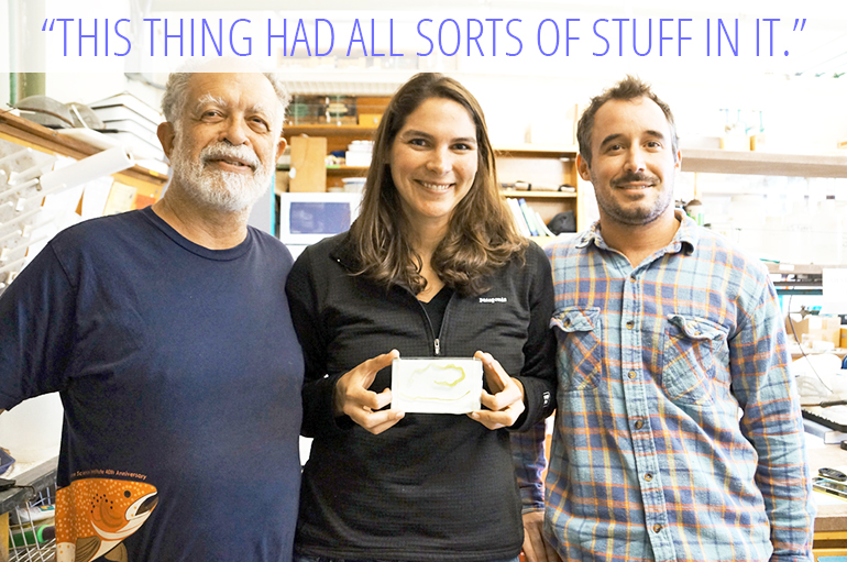 Part of the team that dissected an 18-foot oarfish (from left to right): Armand Kuris, Sara Weinstein, and John McLaughlin. Weinstein holds a 15 cm larval tapeworm found in the fish's intestine. (Credit: Sonia Fernandez)