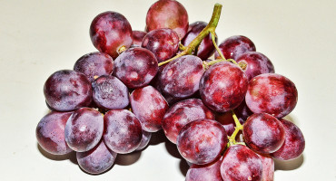 """""""We've seen glimmers of possibilities, and it seems that resveratrol could potentially be very important in treating a variety of cancers,"""" Michael Nicholl says. """"It comes down to how to administer the resveratrol."""" (Credit: Choo Yut Shing/Flickr)"""