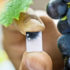 """Vinay Pagay holds a """"lab on a chip"""" that measures moisture levels in soil and plants stems. The tiny sensor is much smaller and a hundred times more sensitive than current devices. (Credit: Jason Koski)"""