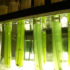 If it lives up to its promise, bioclock stopping could have significant economic benefits. Microalgae are used for a wide variety of commercial applications ranging from anti-cancer drugs and cosmetics, to bioplastics, biofuels, and neutraceuticals. (Credit: Dave Thomas/Flickr)