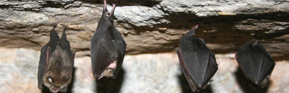 """""""Our research here uncovered a wide diversity of potentially pandemic viruses present, right now, in bats in China that could spill over into people and cause another SARS-like outbreak. Even worse, we don't know how lethal these viruses would be if such an outbreak erupted,"""" says Peter Daszak. (Credit: Jessica/Flickr)"""