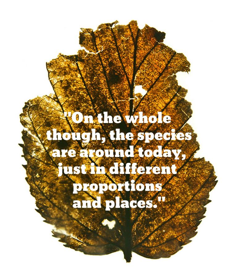 leaf_quote_770