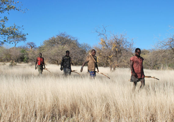 Like sharks and honeybees, humans use a Lévy walk pattern while foraging, according to a new study in which the Hadza people, hunter-gatherers in Tanzania, wore wristwatches with GPS trackers that followed their movements. (Credit: Brian Wood/Yale University)