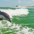 Dolphins in an area of the Gulf of Mexico hard hit by the Deepwater Horizon oil spill were five times more likely than other dolphins to have moderate to severe lung diseases and uncommon hormone abnormalities.  (Credit: Visit St. Pete-Clearwater/Flickr)
