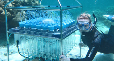 Katie Shamberger takes water samples by coral bed in Rock Islands near Palau. (Credit: Woods Hole Oceanographic Institute)