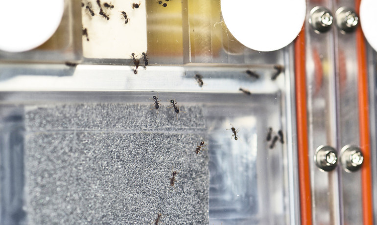 A close look at the ant experiment onboard the International Space Station. (Credit: NASA)