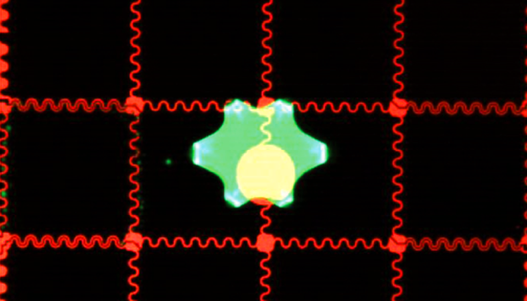 Cells, caught up in a hydrogel material, gently flow across a small field that, on a screen, looks much like a tiny chessboard. The cells are strategically manipulated by a small electric field across a cutout shape on the top plate of the system, made from indium in oxide, and become fixed. (Credit: Irwin A. Eydelnant)