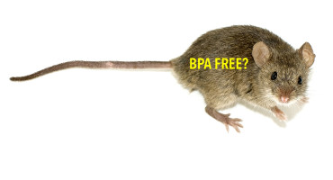 """More research is needed to determine the implications for human health, Caren Weinhouse says. """"This current study showing liver tumors in mice says let's take another look at BPA and cancer in humans."""" (Credit: Duncan Hull/Flickr)"""