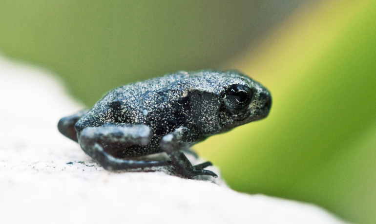 """""""We can either sit back and watch as species get squeezed out of existence and food webs reshuffle or we can try to be proactive in designing conservation strategies,"""" says Ben Halpern. """"Our research and maps offer a window into what the future of biodiversity will look like, and we have a chance to improve the view from that window."""" (Credit: Thomas Binek/Flickr)"""