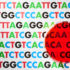 Researchers have zeroed in on a gene that appears to affect blood lipid levels and to lower heart attack risk. (Credit: iStockphoto)