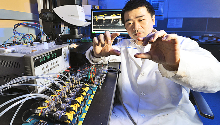 Iowa State's Liang Dong examines a microfluidic seed chip, an essential part of the instrument he's developing to study the effects of genes and environmental conditions on the look, size, color, and development of plants. (Credit: Bob Elbert/Iowa State University)