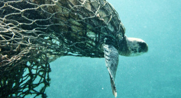 Thousands of sea turtles drown every year after being trapped in fishermen's nets. (Credit: Doug Helton/NOAA)
