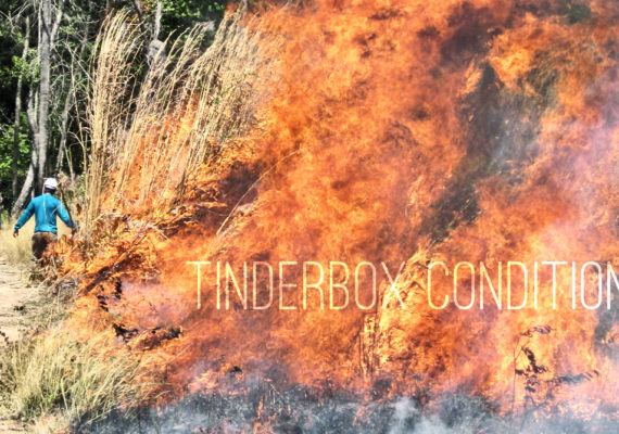At the forest edge of the experiment, where it is drier and hotter, intense fires are fueled by invasive grasses that have accompanied the expanding agricultural frontier. (Credit: Jennifer Balch/Penn State, Tyler Finck/FontSquirrel)