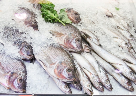 The limitation with consumption advisories is that while they inform people what not to eat, they do not offer much in the way of healthy alternatives, says Professor Frank Wania. In fact, substituting fish with meat such as beef may even end up doing more harm. (Credit: Ken Jones)