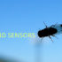 """Beyond learning more about the fly's wind-sensing capabilities, Sawyer Fuller says that this information will also help engineers design small flying robots—creating a sort of synthetic fly. """"Our results suggest that little flying vehicles would also do well to have fast wind sensors to compensate for this delay."""" (Credit: John Tann/Flickr)"""