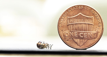A wireless system that powers very small medical implants could one day let doctors treat diseases and relieve pain without medications. (Credit: Stanford)