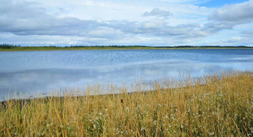 The permafrost is expanding around the banks of Twelvemile Lake in Alaska. (Credit: McGill)