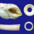 A Nucella (common dog whelk) shell together with one of the beads the researchers believe may be created from this or a closely related species (top) and an Antalis (tusk) shell together with the bead the research team believe is cut from a shell like this (bottom). (Credit: Dr Sonia O'Connor)