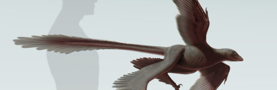 Rreconstruction of Changyuraptor yangi