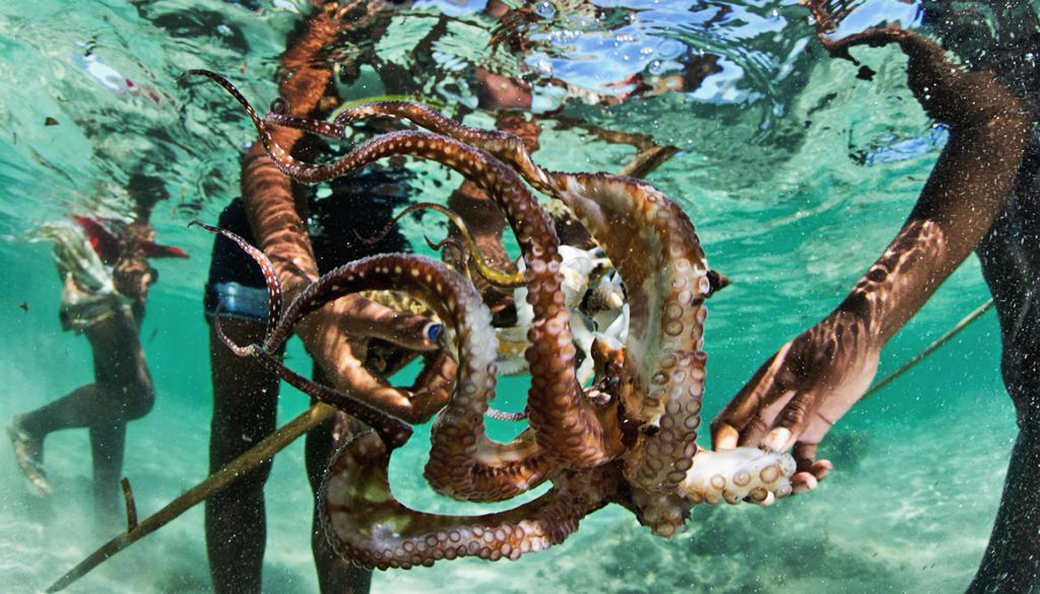 hands grab an octopus under the water