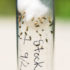 fruit flies in a tube