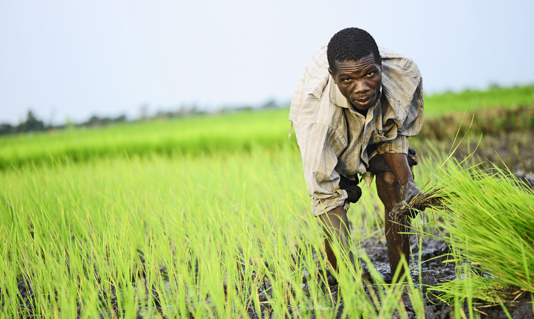 rice farmer in Uganda
