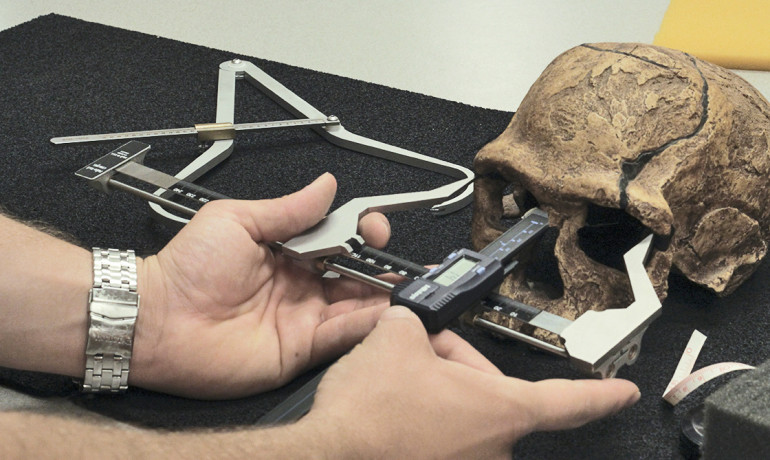 scientist measures a skull