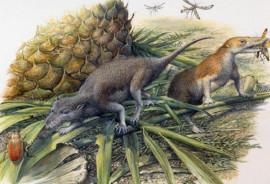 Morganucodon and Kuehneotherium