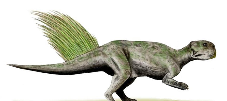 Psittacosaurus illustration
