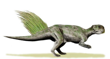 Psittacosaurus illustration