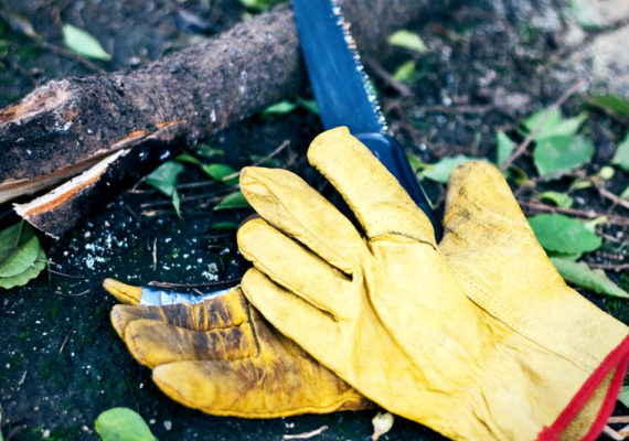 gloves and saw for pruning tree