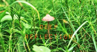 mushroom among grasses