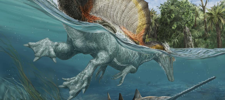 flesh rendering of Spinosaurus swimming