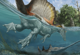 flesh rendering of Spinosaurus swimming