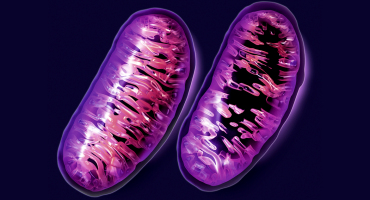 mitochondrial dysfunction comparison
