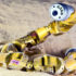 """If a robot gets stuck in the sand, that's a problem, especially if that sand happens to be on another planet,"" says Joe Mendelson. ""Sidewinders never get stuck in the sand, so they are helping us create robots that can avoid getting stuck in the sand. These venomous snakes are offering something to humanity."" (Credit: Rob Felt)"