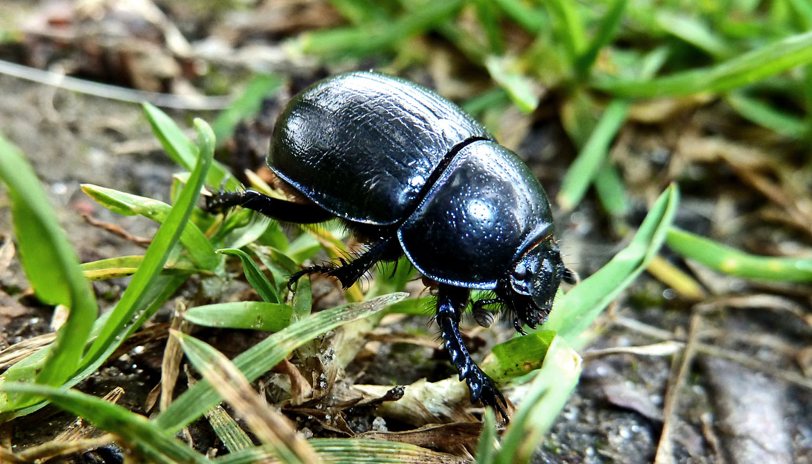 beetle crawling on grass