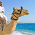 man riding a camel on the beach