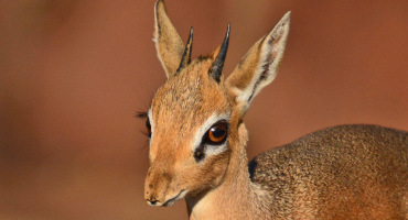 (Credit: Ian White/Flickr)