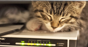 kitten sleeps on an internet router