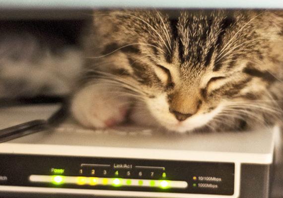 kitten sleeps on an internet router