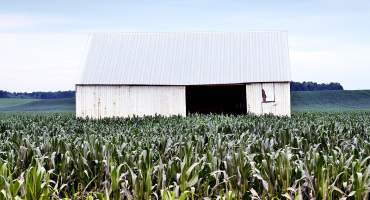 barn surrounded by corn fields