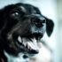 panting dog uses oxygen