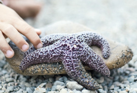 child touches a starfish